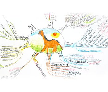 Mindmapping - Learn like the brain